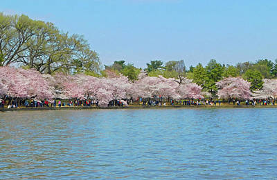 Photograph - Cherry Blossoms At The Tidal Basin by Emmy Marie Vickers
