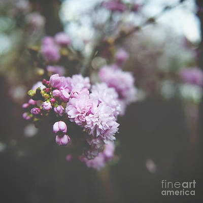 Photograph - Spring Flirtations by Ivy Ho