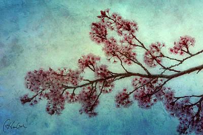 Cherry Blossoms Art Print by Christine Hauber