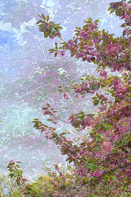 Photograph - Cherry Blossoms Collage 2 by Dave Beckerman