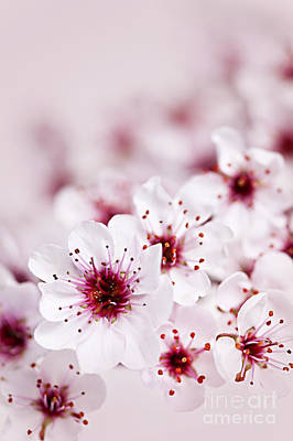 Abstract Stripe Patterns - Cherry blossoms by Elena Elisseeva