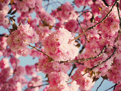 Cherry Blossoms Galore Art Print by Georgiana Romanovna