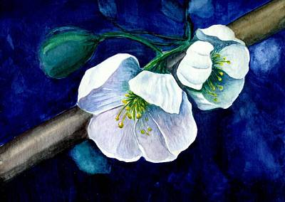 Cherry Blossoms Art Print by Georgia Pistolis