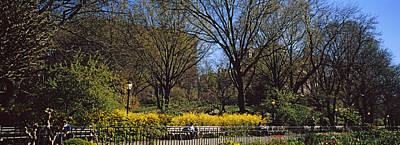 Riverside Park Photograph - Cherry Blossoms In A Park, Riverside by Panoramic Images