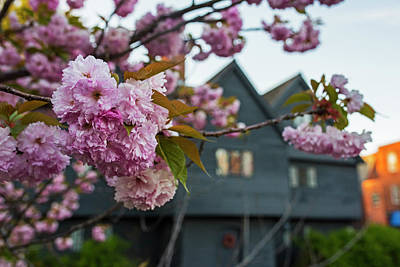 Photograph - Cherry Blossoms In Front Of The Salem Witch House Salem Ma by Toby McGuire