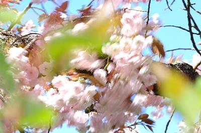 Photograph - Cherry Blossoms In Motion, Sakura by Martin Stankewitz