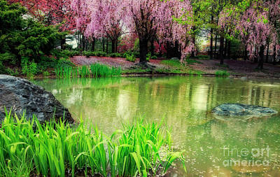 Photograph - Rain Of Pink Cherry Blossoms by Charline Xia