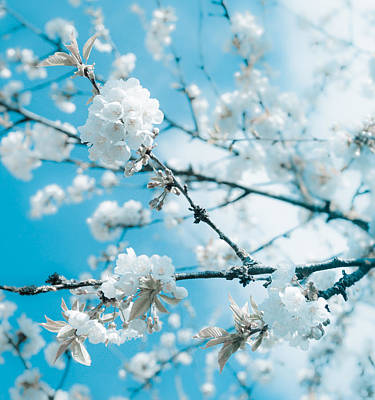 Photograph - Cherry Blossoms In Spring by Nila Newsom