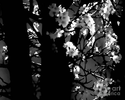 Digital Art - Cherry Blossoms In The Back Bw by Tim Richards