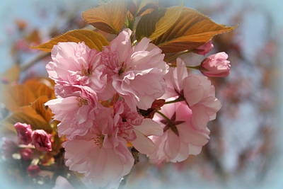 The Sakura Photograph - Cherry Blossoms In The Garden by Dora Sofia Caputo Photographic Art and Design
