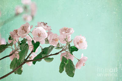 Photograph - Cherry Blossoms by Jim And Emily Bush