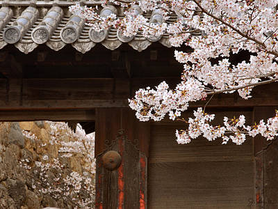 Photograph - Cherry Blossoms by Joe Bonita
