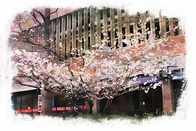 Photograph - Cherry Blossoms by Marcia Lee Jones