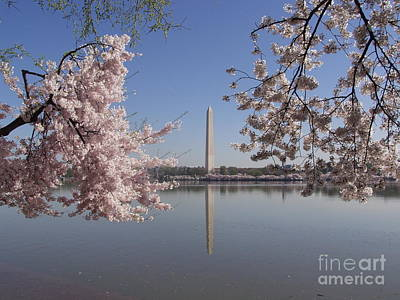 Photograph - Cherry Blossoms Monument by April Sims