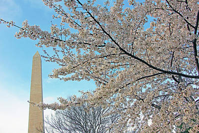 Photograph - Cherry Blossoms Near The Washington Monument by Cora Wandel