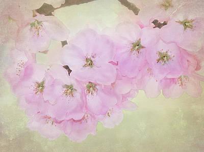Digital Art - Cherry Blossoms by Nina Bradica