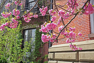 Photograph - Cherry Blossoms On Beacon Hill Boston Ma by Toby McGuire
