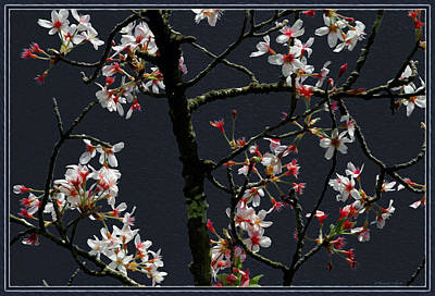 Cherry Blossoms On Dark Bkgrd Art Print
