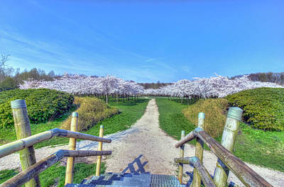 Photograph - Cherry Blossoms Park by Nadia Sanowar