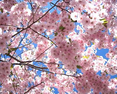 Photograph - Cherry Blossoms by Patricia E Sundik