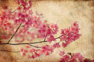 Vintage Flowers Photograph - Cherry Blossoms by Rich Leighton