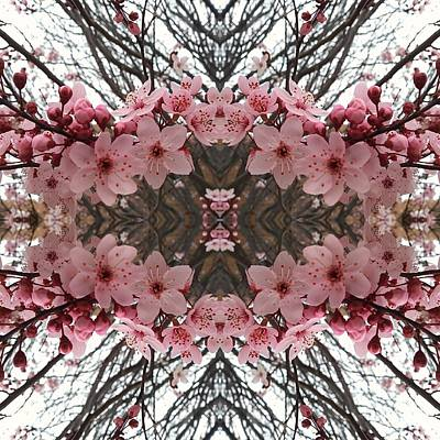 Photograph - Cherry Blossoms by Rick Frausto