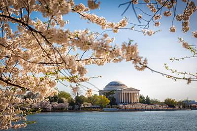 Cherry Blossoms Art Print by Robert Davis