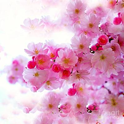 Photograph - Cherry Blossoms by Saundra Myles