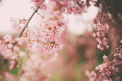 Cherry Blossoms Art Print by Tracy  Jade