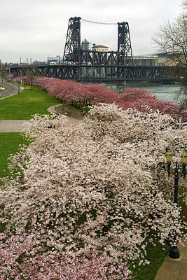 Photograph - Cherry Blossoms Trees Along Portland Waterfront by David Gn