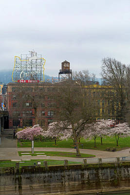 Photograph - Cherry Blossoms Trees In Portland Old Town by David Gn