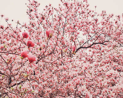 Cherry Blossoms Art Print by Vivienne Gucwa