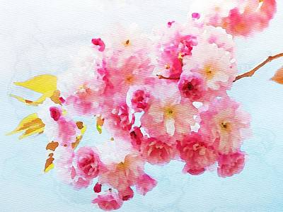 Painting - Cherry Blossoms by Watercolor