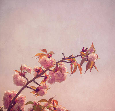 Photograph - Cherry Blossoms by Wim Lanclus