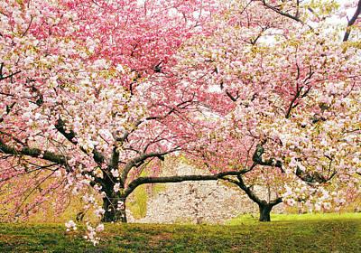 Photograph - Cherry Delight by Jessica Jenney