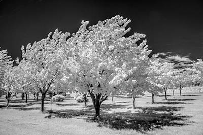 Photograph - Cherry Orchard In Infrared At The Cherry Point Farm Market by Randall Nyhof
