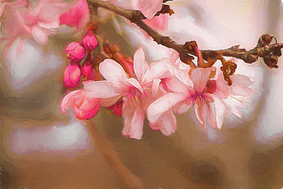 Photograph - Cherry Pink by Larry Bishop