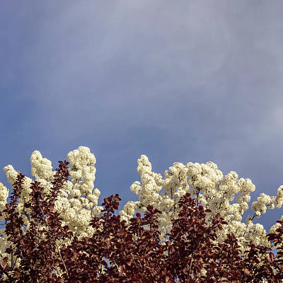 Photograph - Cherry Plum And White Flowers by Tim Reich