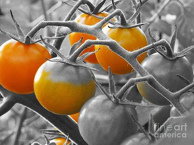 Photograph - Cherry Tomatoes by Chad and Stacey Hall