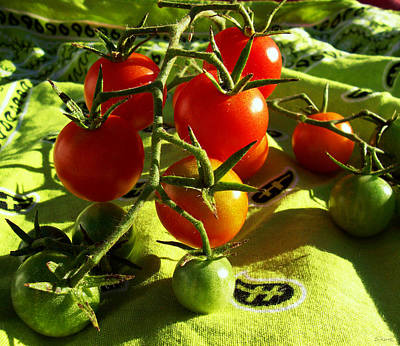 Photograph - Cherry Tomatoes by Shawna Rowe