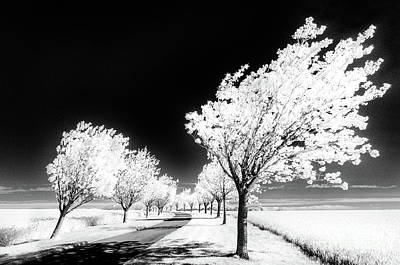 Infra-red Photograph - Cherry Tree Grove Wolds Way by Janet Burdon