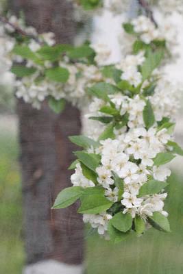 Digital Art - Cherry Tree Wash by Donna L Munro