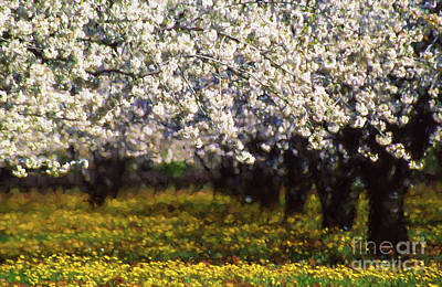 Deco Photograph - Cherry Trees And Wild Flowers by Robert Brown