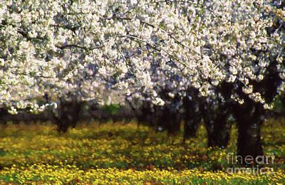 Cherry Trees And Wild Flowers Art Print