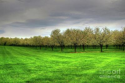 Photograph - Cherry Trees Forever by Randy Pollard