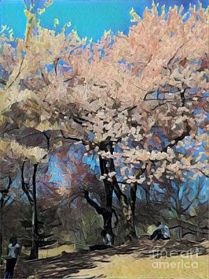 Photograph - Cherry Trees In Bloom - Spring In Central Park by Miriam Danar