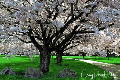 Photograph - Cherry Trees In Spring by Craig Perry-Ollila