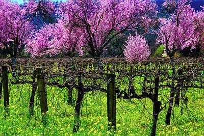 Cherry Trees In Vineyards Art Print