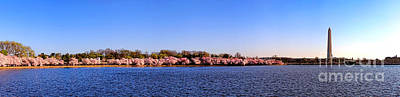 Photograph - Cherry Trees On The Tidal Basin And Washington Monument  by Olivier Le Queinec