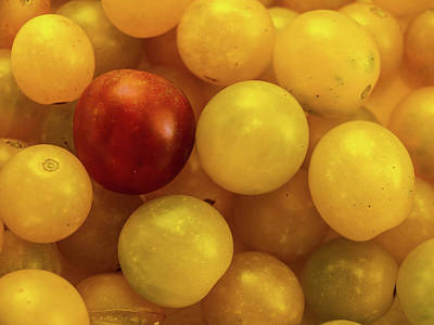 Photograph - Cherry Yellow Tomatoes by Randy Sylvia
